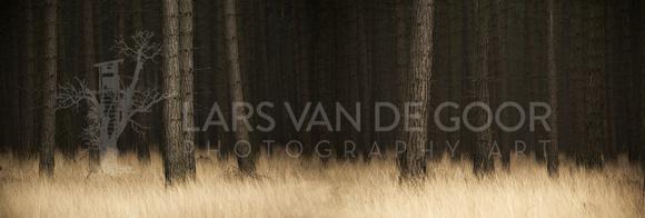 pine pano by lars van de Goor